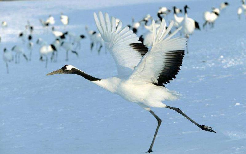 鹤组词和拼音,鹤的同音字是什么-飞速吧